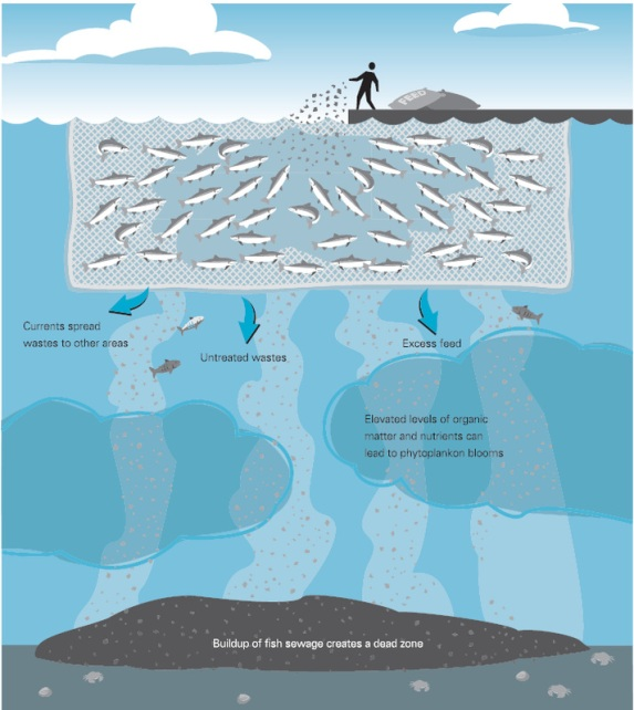 Image credit: Michael L. Webe   SeaWeb Aquaculture Clearing House  