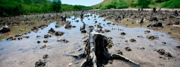 Massive deforestation of mangroves has occurred in Sri Lanka