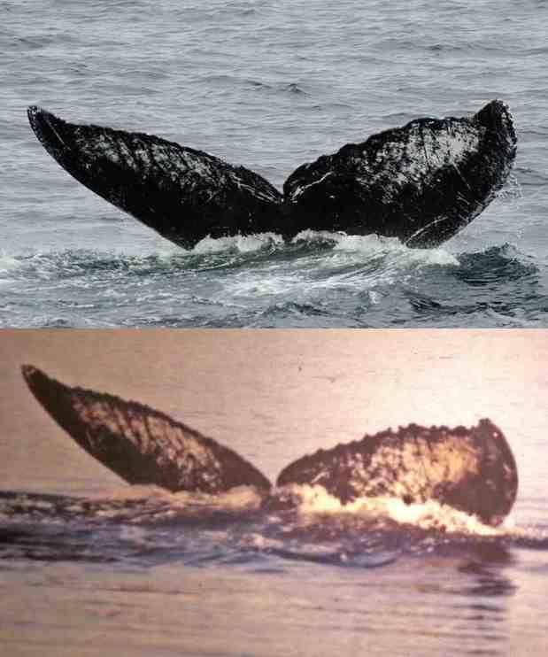 04obs-whale-jumbo